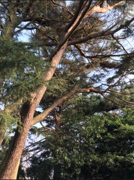Saving Hillcrest Ancient Woodland From Lewisham Homes Lfgn