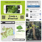 Create a Tree Trail